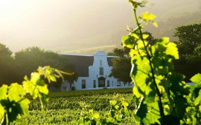 Groot Constantia Chardonnay Awarded Amongst Best In The World
