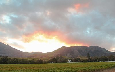 Groot Constantia pockets a decuplet of top awards at SA Top 100 Wines competition