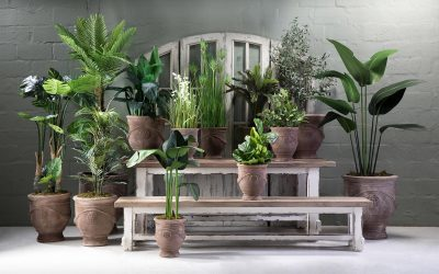 How to pot your plants beautifully and turn your indoor plants into a decor statement.